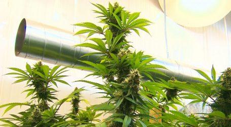 Legal pot on track for July but actual retail sales may take longer