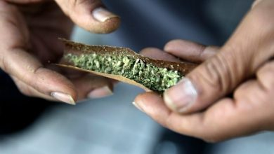 Photo of Governo federal vai gastar 36,4 milhões de dólares em cinco anos na campanha para educar os canadianos sobre a legalização da marijuana