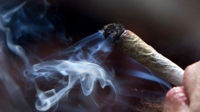 Photo of Ontário vai introduzir legislação para venda e distribuição de marijuana