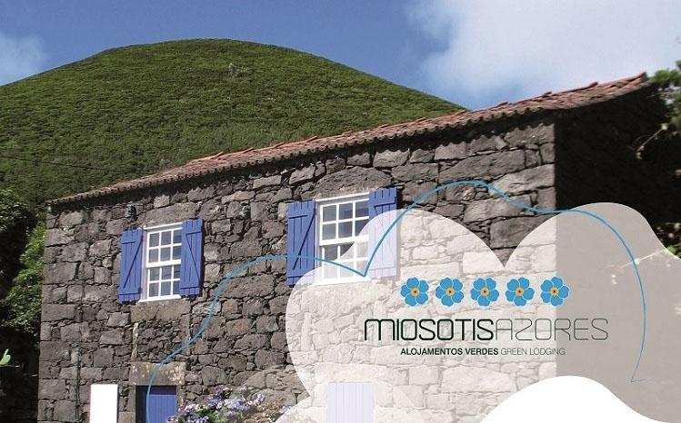 Photo of 19 alojamentos vencem Miosótis
