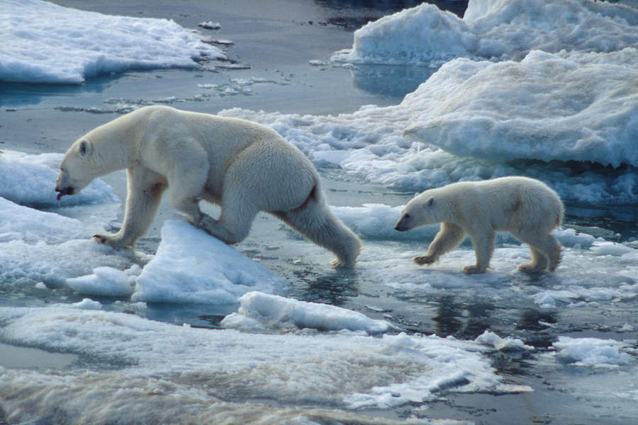 Photo of Senate report calls on Ottawa to fix 'neglected' Arctic