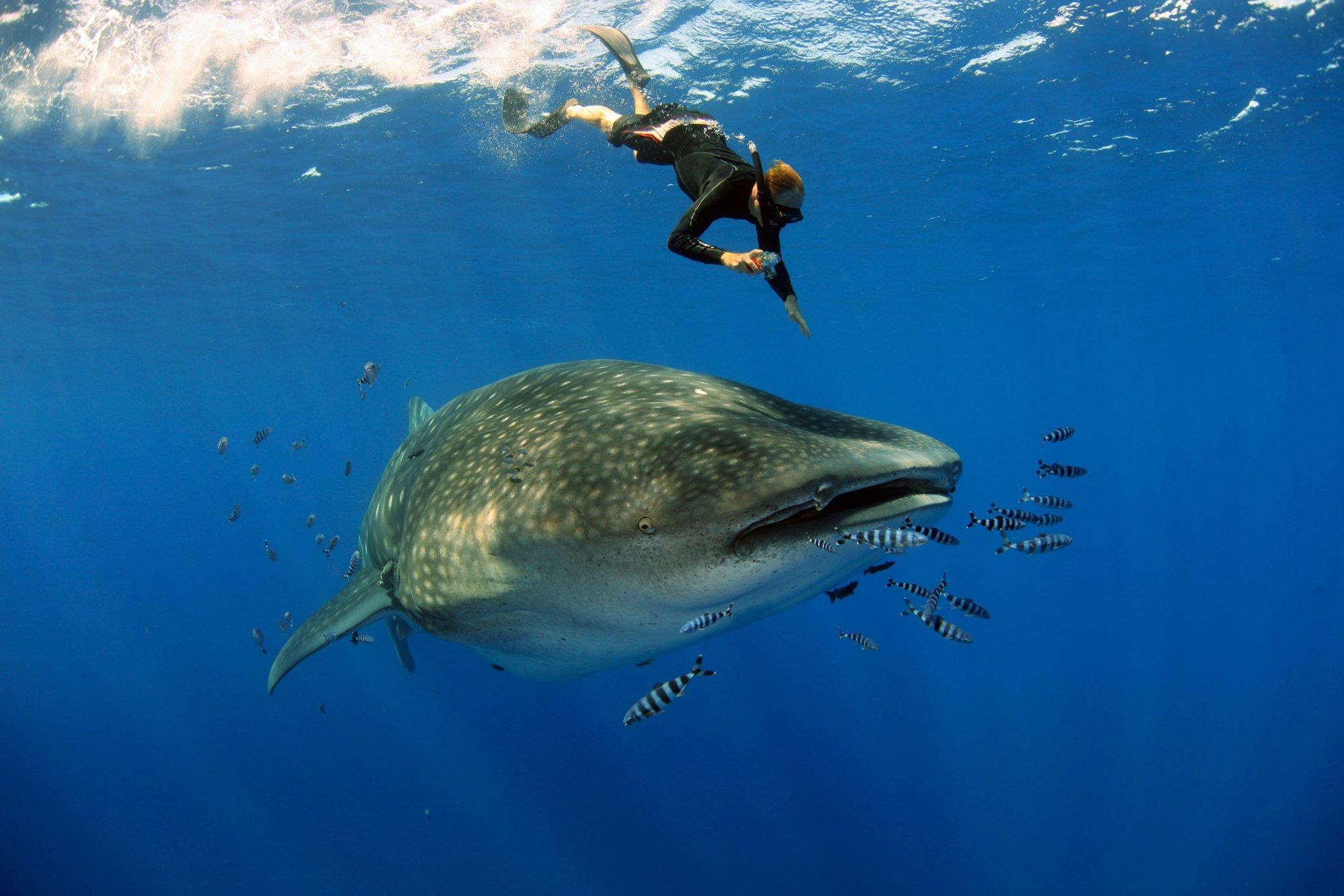 Photo of Federação das Pescas preocupada com a salvaguarda dos recursos marítimos