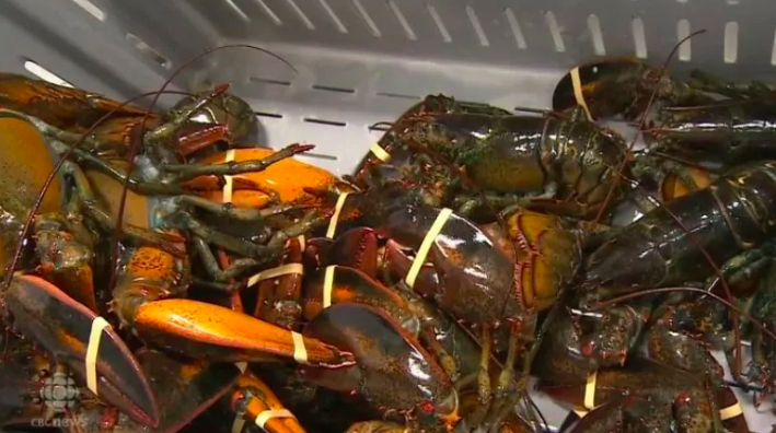 Photo of Canada takes no stance on whether lobster shippers should sign Chinese liability form