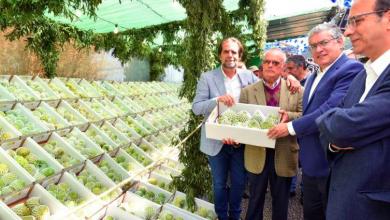 Photo of Madeira irá exportar cerca de 40 toneladas de anona