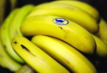 Photo of Venda de banana da Madeira aumentou 29%