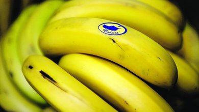 Photo of ABAMA diz-se impedida de estar na Mostra da Banana