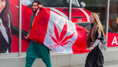 Photo of Ontario's first legal pot shops won't slow down 'robust' black market, experts warn