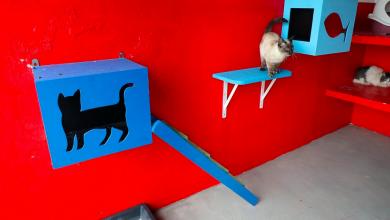 Photo of Esterilização gratuita de gatos em Ponta Delgada
