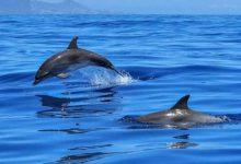 Photo of Governo inicia processo de reestruturação da rede de áreas marinhas protegidas
