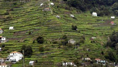 Photo of Açores e Madeira assinam texto sobre Política Agrícola Comum no pós-2020