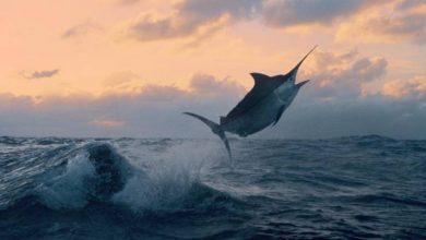 Photo of Pesca: Graciosa testa projecto-piloto