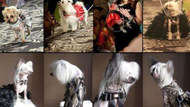 Photo of Empresária filha de açorianos faz sucesso no Canadá com linhas de roupa para cães