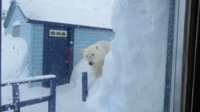 Photo of Lucky to be alive after 'horrifying' polar bear encounter, couple says