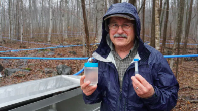 Photo of Solving maple syrup's sticky situation: knowing when the season ends