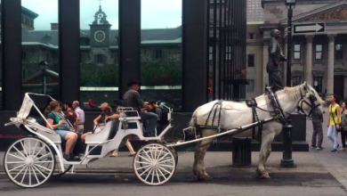 Photo of Montreal's calèche horse owners to receive $1K in compensation