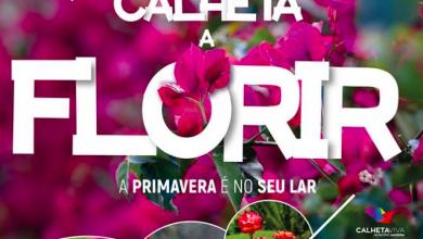 Photo of 'Calheta a Florir' durante todo ano