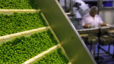 Photo of First canola, now peas and soybeans — Canadian crops face more headaches getting into China