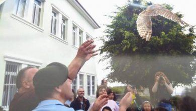 Photo of Escola do Covão celebra devolução de Coruja-das-torres ao seu habitat natural