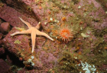 Photo of Canada to ban industrial activities inside marine-protected areas
