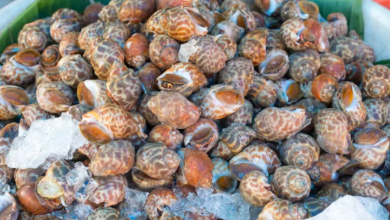 Photo of Sea snails project 1 of 11 fisheries projects to get government cash