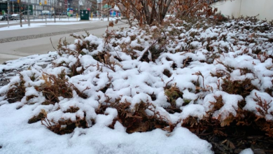 Photo of Warmer weather expected Wednesday after spring snow blankets city