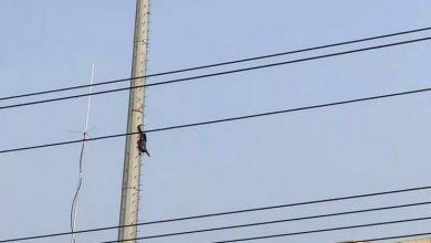 Photo of Homem sobe a poste de eletricidade e fica pendurado de cabeça para baixo