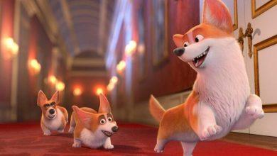 Photo of Cães preferidos de Isabel II dão origem a filme animado