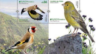 Photo of CTT homenageiam aves da Madeira