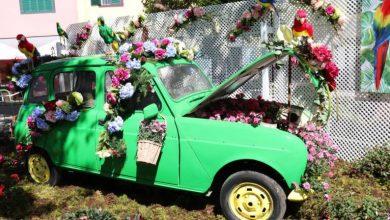 Photo of Santa Cruz comemora Festa da Flor pela 1.ª vez