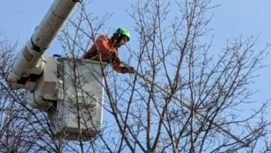 Photo of Forestry crews hanging out at coffee shops, plazas – and costing city millions