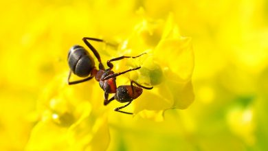 Photo of Terra Viva – As Formigas e o equilíbrio ambiental