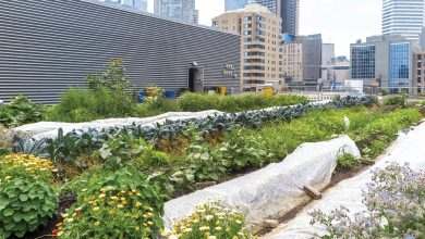 "Photo of Toronto Community Garden Network: ""To learn the importance of caring for land and water"""
