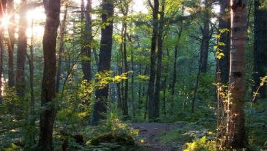 Photo of Ottawa throws lifeline to 50 Million Tree Program cut by Ontario government