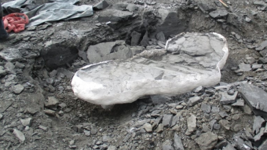 Photo of 70-million-year-old 'sea monster' discovered by miners in southern Alberta