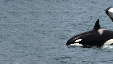 Photo of Terra Viva – Orcas