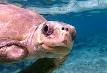 Photo of Viagem grátis às Maldivas para ajudar as tartarugas