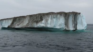 Photo of Icebergs moving from Greenland to Newfoundland slowing dramatically by end of century, researcher says