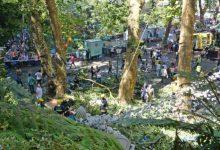 Photo of Caso da árvore do Monte em stand by até outubro