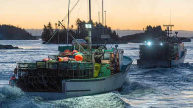 Photo of Canada joins global pact to stop illegal fishing trade