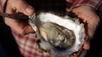 Photo of Batch of Pacific oysters recalled due to threat of paralytic shellfish poisoning