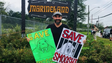 Photo of Marineland calls police after tweet from activist