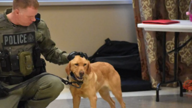 Photo of How Zoe the police dog sniffed out 2 missing girls in Ontario's Algonquin Park