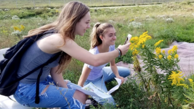 Photo of How to help save the bees with your smartphone