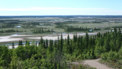 Photo of UNESCO gives Canada new deadline to preserve Wood Buffalo National Park