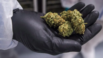 Photo of Ontario Cannabis Store returns $2.9M worth of CannTrust products