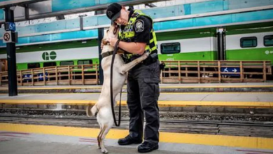 Photo of Metrolinx to oversee new K9 unit at Union Station