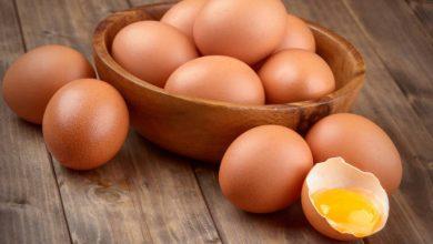 Photo of Pesca, produção de ovos e abate de gado aumentaram na Madeira