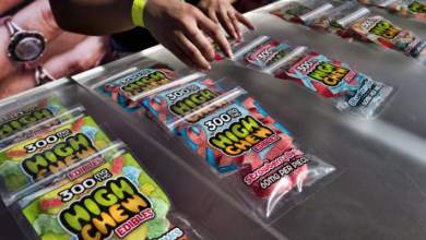 Photo of Companies push ahead on pot gummy plans despite hazy regulations