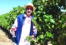 Photo of Vinhos de Berardo estão a subir vendas
