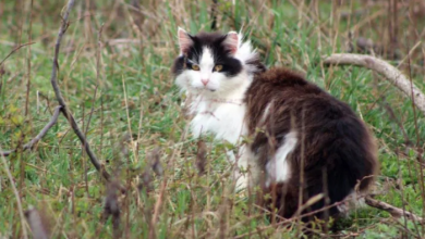 Photo of 17,000 feral cats could be roaming Toronto